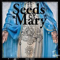 SEEDS OF MARY  Choose Your Lie